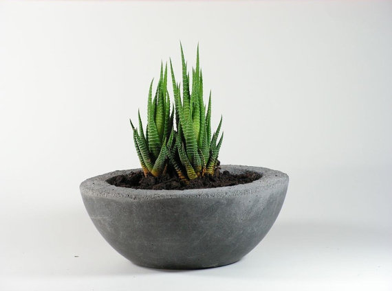 rough concrete bowl succulent planter