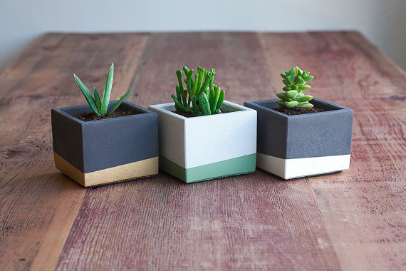 trio of square color block succulent planters