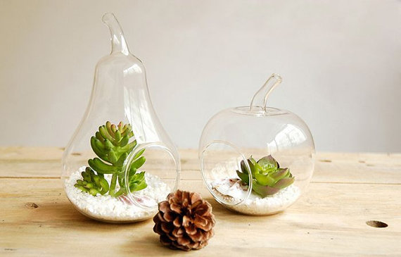 apple and pear glass succulent planter